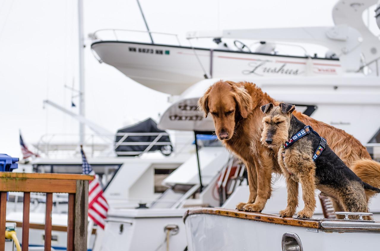 perro-mascota-londres-viajar